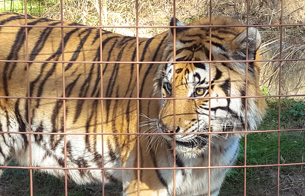 A Day of Learning at Big Cat Rescue - Casual Travelist